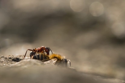 Ant having lunch