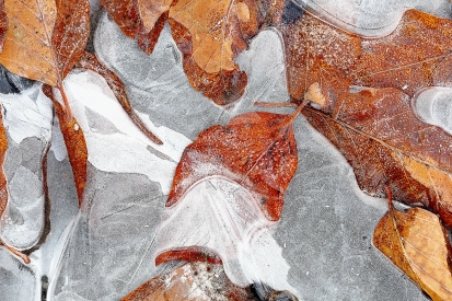 Icy autumn