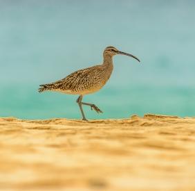 Bird collie on the beach against the sea
