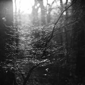 Light in the branches