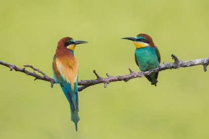 Colorful birds on a twig