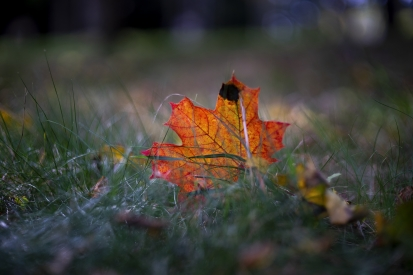 Autumn in the grass