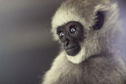 Portrait of a primate - view