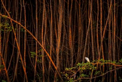 Heron in the coastal vegetation
