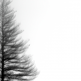 Larch elegance