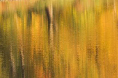 Autumn on the surface