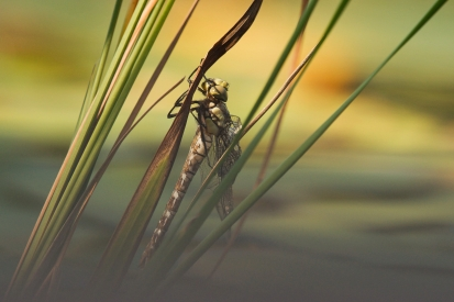 The birth of a dragonfly
