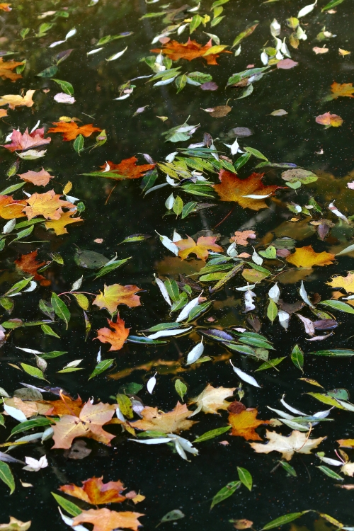 Leaves on the surface