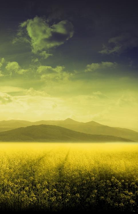 Dreamy landscape