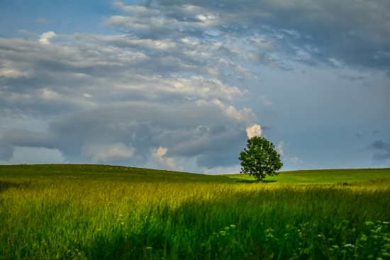 Tree in the fields