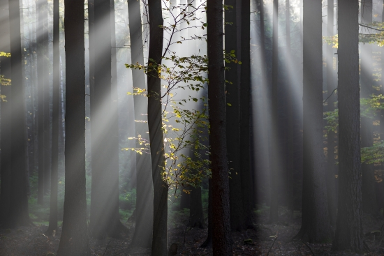 Light and forest