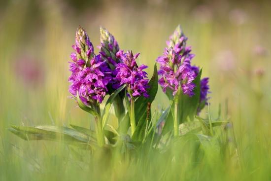 Flower on meadow