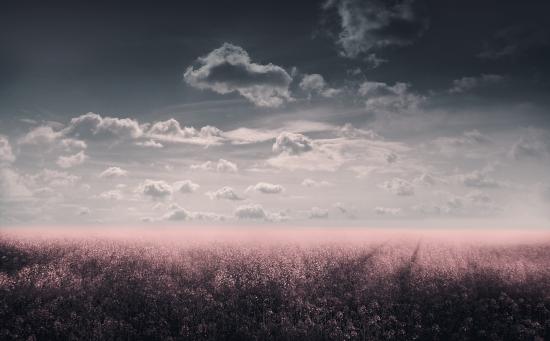 Flowering dreamy meadow