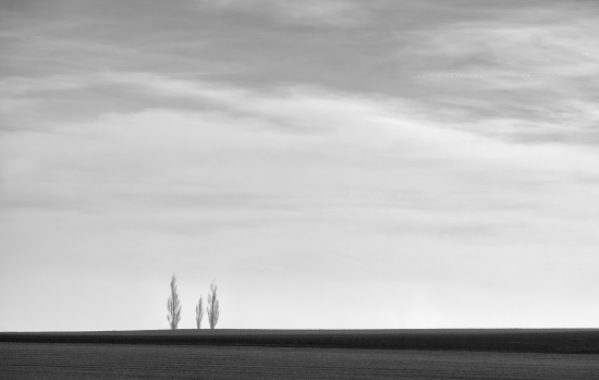 Canvas photo landscape with three trees