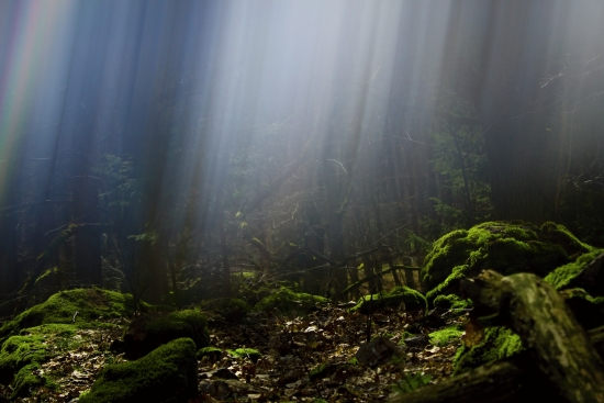 Mysterious forest and rays of light