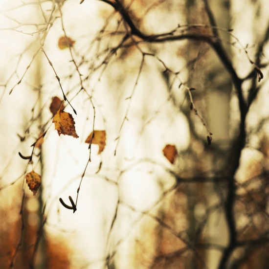 Beautiful image of autumn birch