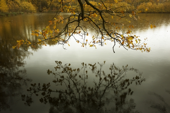 Autumn by the water