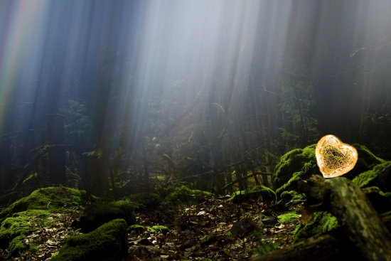 Mysterious forest, rays of light and a glowing heart