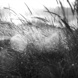 Morning in the grass
